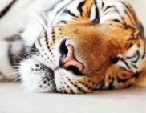 Waking the Asian Tiger economies with a strong customer experience